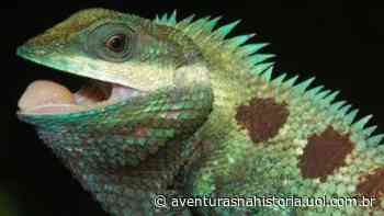 No Camboja, duas novas espécies de lagarto são descobertas - Aventuras na História