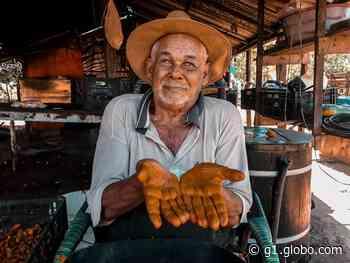 Agricultura familiar gera mais de 2 mil empregos em Primavera do Leste - G1