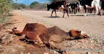 Temen muerte masiva de ganado, en Pueblo Viejo - Vanguardia de Veracruz