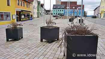 Trinkwassersäule und Blüten - Marktrat Stamsried stimmt für Aufwertung - idowa