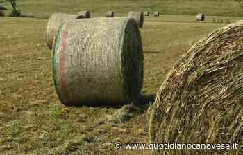 LEINI - Spazi gratuiti per la fienagione riservati agli agricoltori - QC QuotidianoCanavese