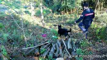 """Il """"regno della droga"""" nei boschi con armi, vedette e cani da guardia: 32 arresti - MonzaToday"""