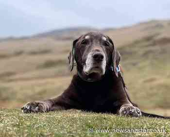Sunderland couple honour dog Jake with tribute in Keswick   News and Star - News & Star