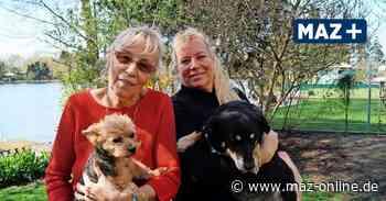 Zeuthen: Regenbogenresidenz für Fellnasen bietet alten Hunden eine Heimat - Märkische Allgemeine Zeitung