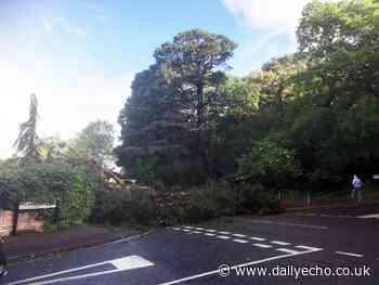 Cobden Avenue reopens after tree fell blocking both lanes - Daily Echo