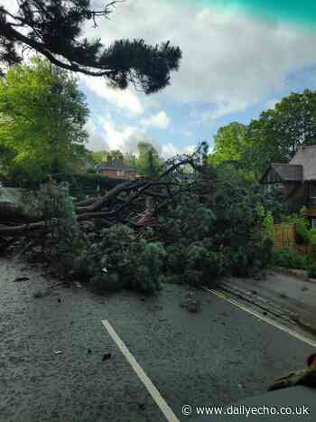 Cobden Avenue closure set to last most of day due to fallen tree - Daily Echo