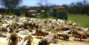 Arapoti e Ortigueira colocam o Paraná como destaque na produção de mel - Folha Extra