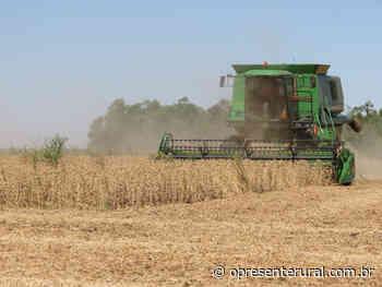 Colheita de soja da Cooperativa Holambra bate recorde de produção - O Presente Rural