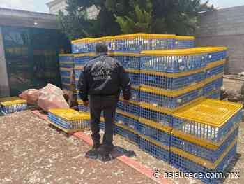 Tras cateo en Zumpango hallan cargamento robado con mil 246 aves para consumo - Noticiario Así Sucede
