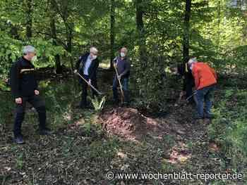 Stechpalme ist Baum des Jahres: Symbolische Baumpflanzung im Gemeindewald Waldbronn - Waldbronn - Wochenblatt-Reporter