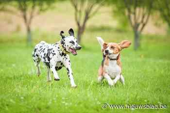 Hondenloopweide op site van de Ark