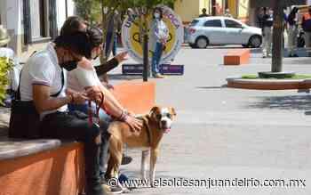 Propone crematorio público para mascotas en Tequisquiapan - El Sol de San Juan del Río