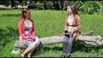 Le regine degli alveari: sette milioni di api a Spresiano, il videoracconto - la tribuna di Treviso