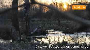 Klimaschutz: Warum ein Moor bei Mertingen jetzt im Fokus steht - Augsburger Allgemeine