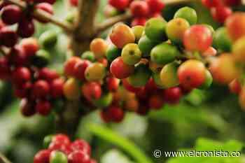 Se invierten 3.800 millones en la producción de café orgánico en Rioblanco (Tolima) - El Cronista