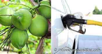 Universidade obtém patente de processo que transforma casca de coco verde em etanol no ES - Razões Para Acreditar