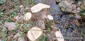 Naturschutz Ärger um radikalen Rückschnitt am Suenbach in Ilsenburg · 11.05.2021 17:42 - Volksstimme