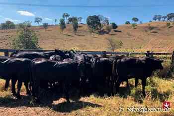 Polícia Civil recupera gado furtado em Nova Ponte - Patos Já