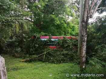 Accidente. Bus de la ruta Aguadulce Panamá se sale de la vía en Panamá Oeste, dejando 5 heridos. Video - Mi Diario Panamá