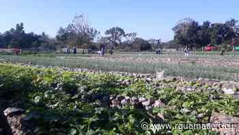 Agricultura Urbana en Herradura se perfila como un referente en la provincia - Radio Guamá