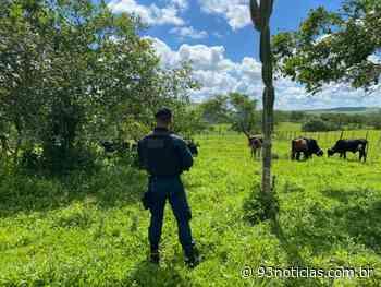 Ladrão de gado é flagrado após denúncia em Tobias Barreto - 93Notícias