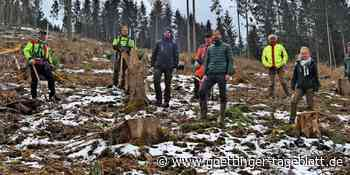 "Windenergiefirma Wpd sponsert 2000 Douglasien für ""Klima-Aktion Wald"" bei Hardegsen - Göttinger Tageblatt"