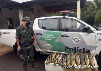 Polícia Ambiental autua homem por transporte irregular de pescado em Tupi Paulista - Portal Regional Dracena