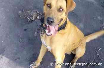 Villaguay: aguardan elevación a juicio de la causa por un perro asesinado a puñaladas   Análisis - Análisis Digital