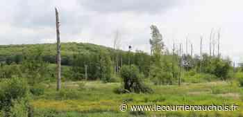 Lillebonne. La Covid-19 retarde la restauration de la zone humide du Four à Chaux - Le Courrier Cauchois