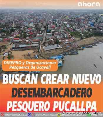 Buscan crear nuevo Desembarcadero Pesquero Pucallpa - DIARIO AHORA