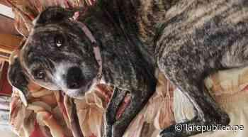 Santa Anita: familia busca a su perrita Luna desde hace una semana - LaRepública.pe