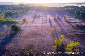 Snake your way along revamped Serpent Trail | News - Farnham Herald