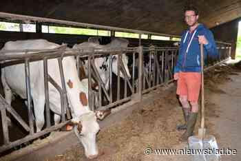 """Karel (36) vormt melkveeboerderij van grootouders en vader om tot biobedrijf: """"Het zal de eerste twee jaar niet makkelijk zijn"""""""
