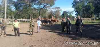 Recuperan siete animales vacunos hurtados de un campo comunal de Mbuyapey - Nacionales - ABC Color