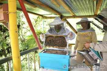 En Dosquebradas existe el único lugar para la protección, conservación y rehabilitación de insectos polinizadores - El Diario de Otún