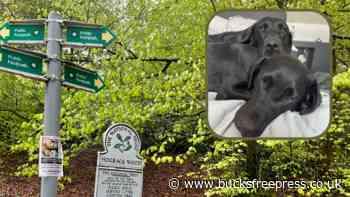 Two Labradors are killed on Beaconsfield railway line - Bucks Free Press