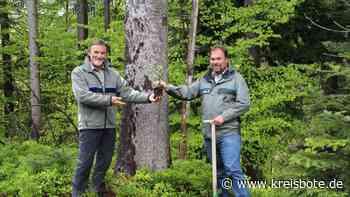 Neuer Forst-Chef: Simon Östreicher übernimmt Bereichsleitung Forsten - Kreisbote