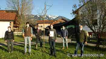 Stadtklima in Sonthofen: CSU-Stadträte wollen Bäume erhalten - Kreisbote