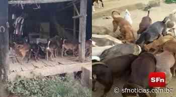 Desesperada, moradora de Cambuci que dedica a vida para cuidar de 70 cães resgatados busca ajuda - SF Notícias