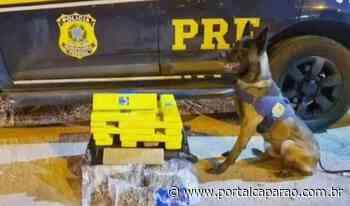 PRF apreende 24 Kg de entorpecentes em Ibatiba - Portal Caparaó