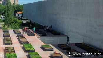 A maior horta urbana do país está a nascer em Matosinhos - Time Out