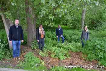 Teralfene krijgt er meer dan twee hectare openbaar bos bij