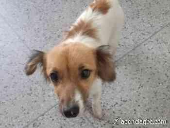 Idoso é flagrado estuprando cachorra em Sapucaia do Sul - Agência GBC