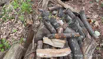 Permits required for firewood in Chequamegon-Nicolet National Forest - WDIO