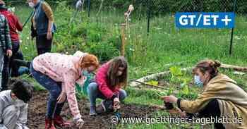Fünftklässler der IGS Bovenden pflanzen im Schulgarten Gemüse – andere werden es essen - Göttinger Tageblatt