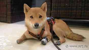 Kamp-Lintfort: Yumi lernt jetzt, mit Prothesen zu laufen - NRZ