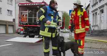 Feuerwehr rettet Hündin bei Brandeinsatz in Wadgassen - Zwei Personen verletzt - sol.de