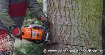 Diskussion in Erkelenz: Keine Mehrheit für eine Baumschutzsatzung - Aachener Nachrichten