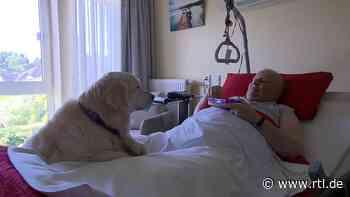 "Golden Retriever ""Oscar"" bringt Hospiz-Bewohner in Erkelenz zum Lächeln - RTL Online"