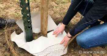 Hiddenhausen möchte Klimabäume verschenken - Neue Westfälische